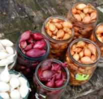 Голландские сорта лука фото. 37 лучших сортов для выращивания репчатого лука