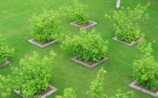 Как правильно разбить фруктовый сад. Разбиваем плодовый сад