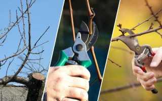 Как обрезать грушу весной видео. Обрезка груши весной: схема для начинающих, как правильно обрезать грушу.